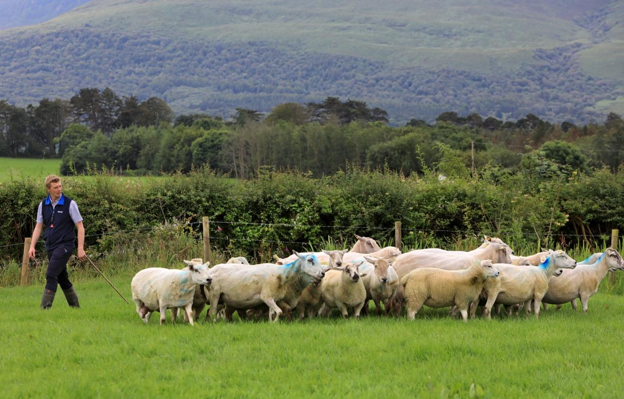0206114_Irish_National_Sheepdog_Trials5.jpg